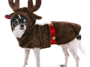 reindeer-dog-costume